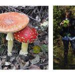 Zwei Männlein ... . und ein Weiblein stehn im Walde